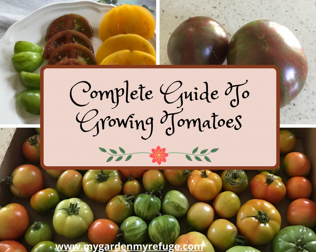 Growing Tomato Guide