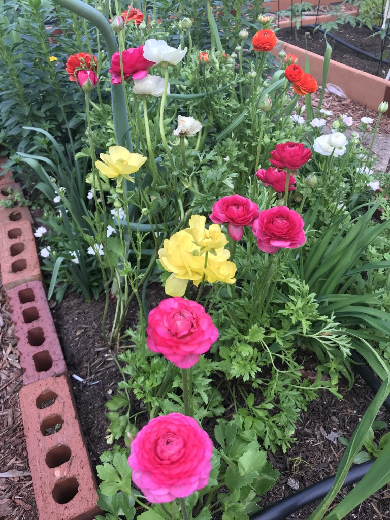 5 easy flowers to grow from seed