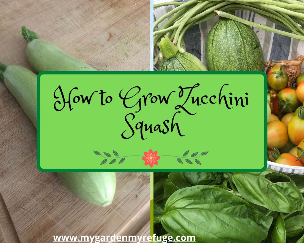 how to grow zucchini squash in central Texas