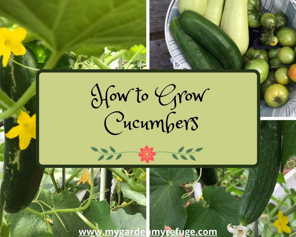 how to grow cucumbers in central Texas