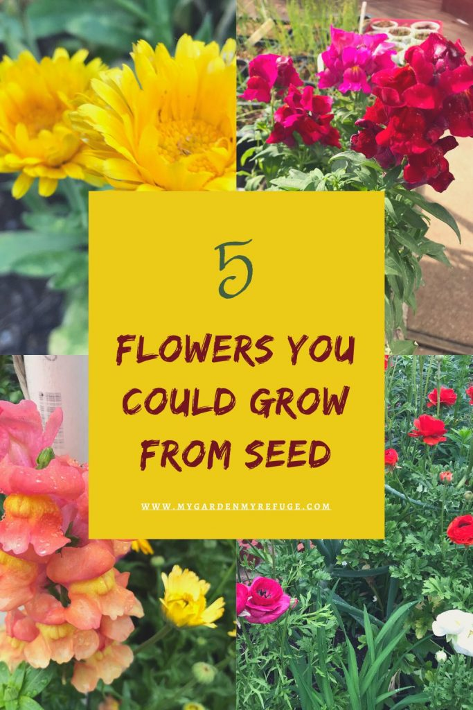 5 easy flowers to grow from seed in in september.
