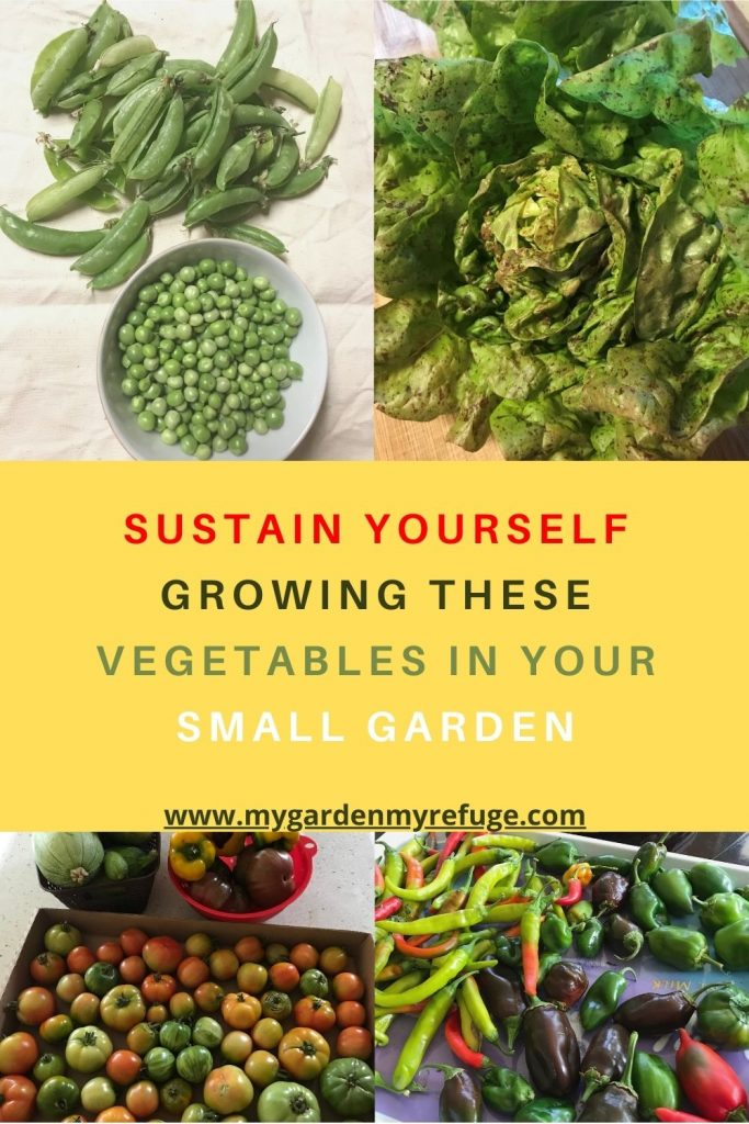 best vegetable for a self-sufficient garden
