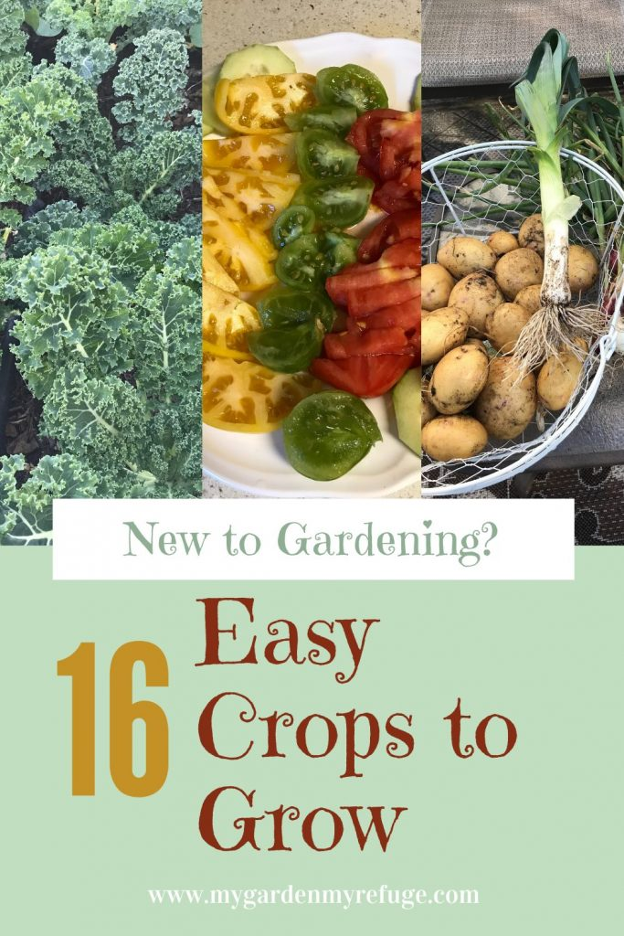Top easy crops to grow for new gardeners