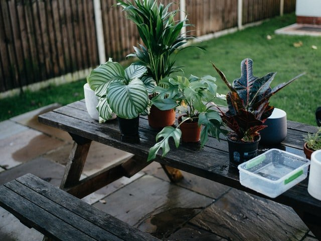 container gardening made simple