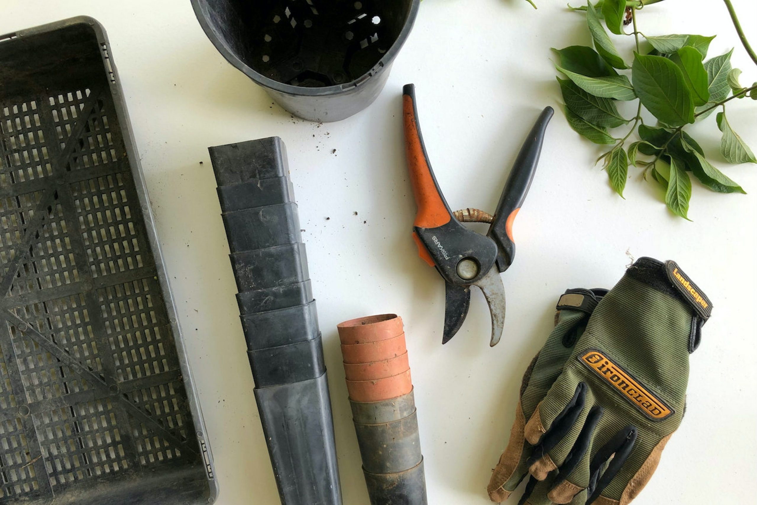 most useful gardening tools for beginners