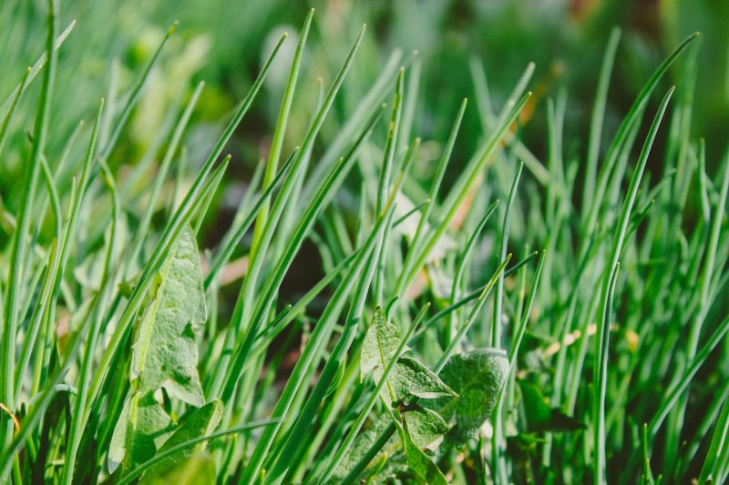 How to control weeds in the garden