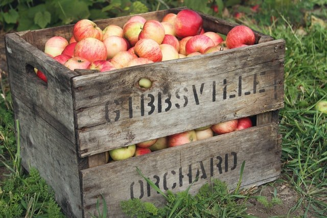 A complete guide to growing fruit trees in Austin