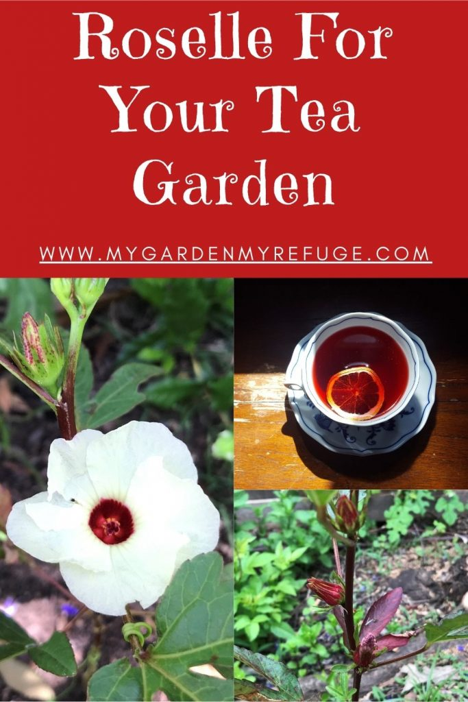 How to grow roselle in central Texas, Austin.