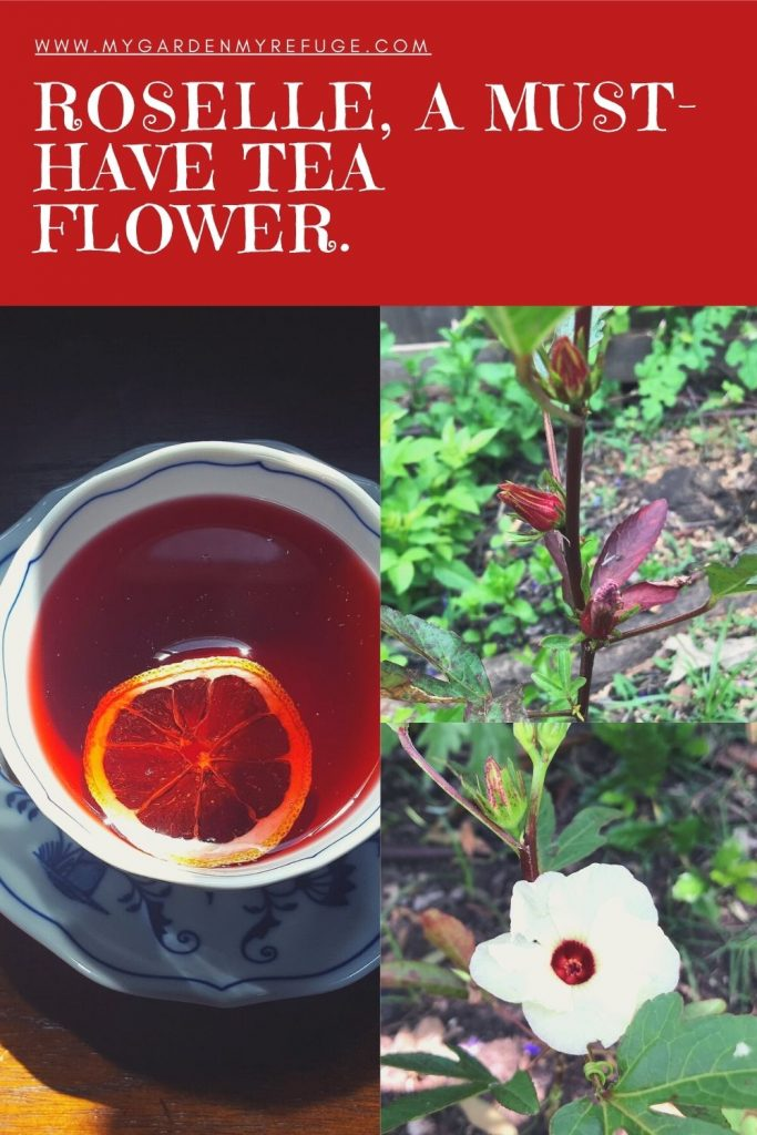 How to grow hibiscus in central Texas, Austin
