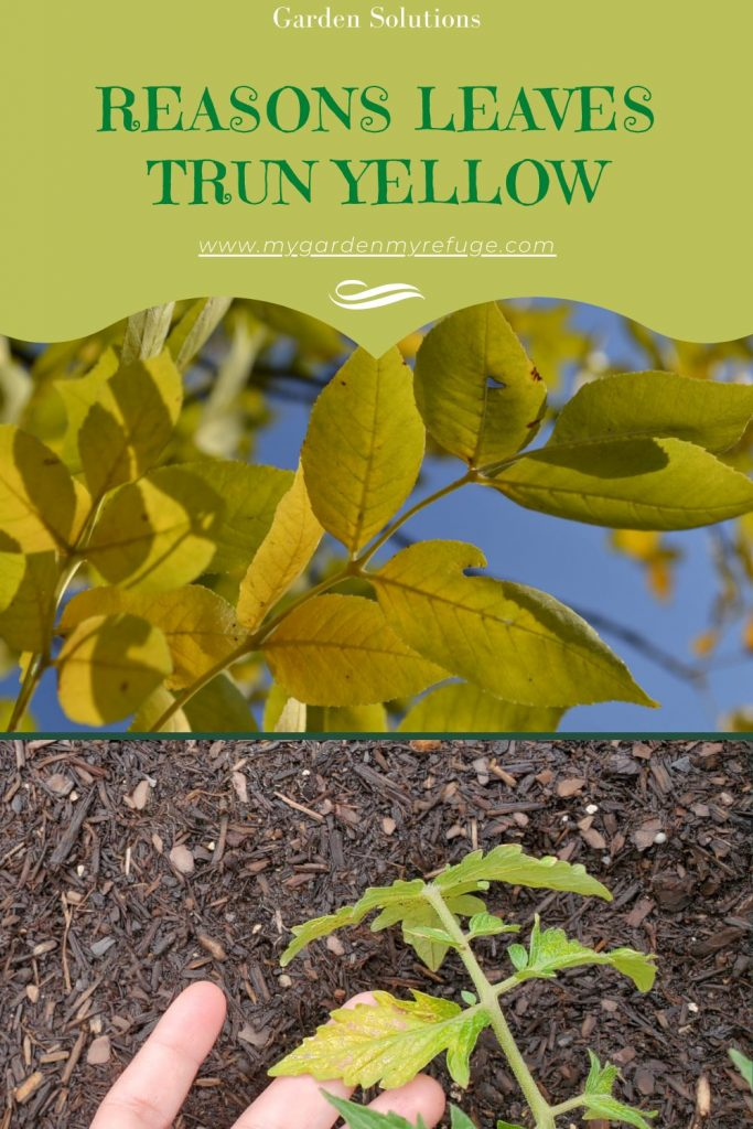 Reasons your plants' leaves are turning yellow