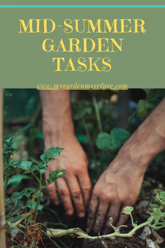 Mid-summer garden chores for Texas gardens.
