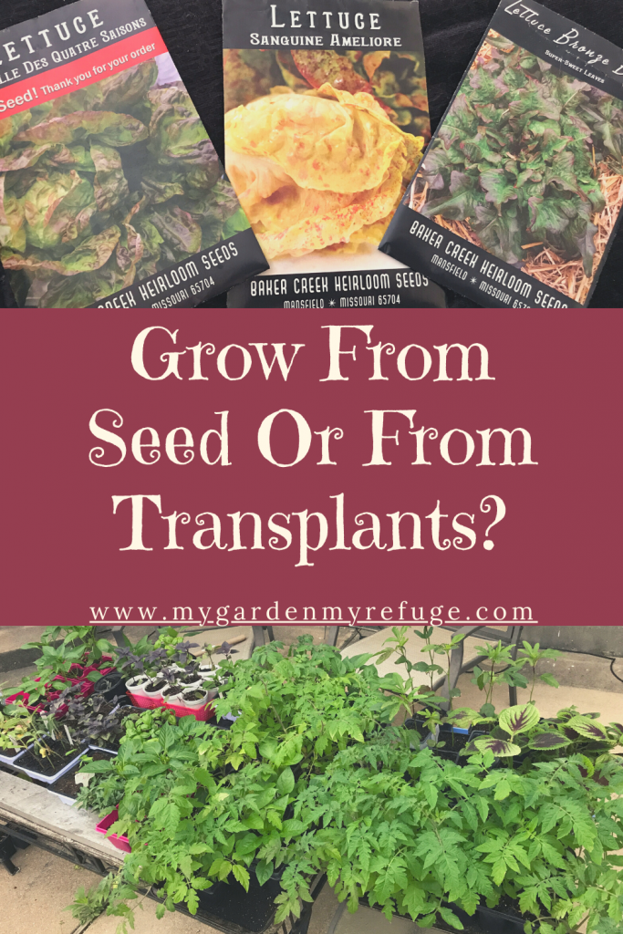 Grow from seed or transplant? how to decide?